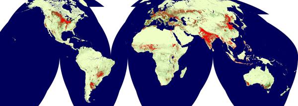 global cropland