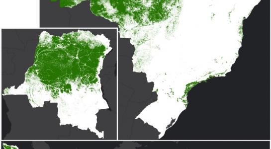 Primary Humid Tropical Forests