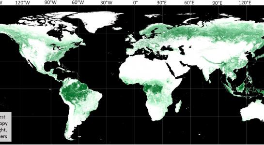 Global Forest Canopy Height, 2019